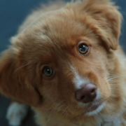 Referentie Annemarie Albersen Hondengedragstherapie